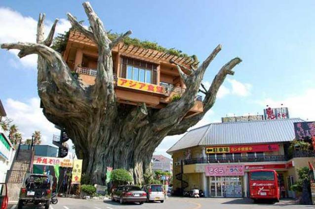 Le case sull'albero più fantasiose al mondo