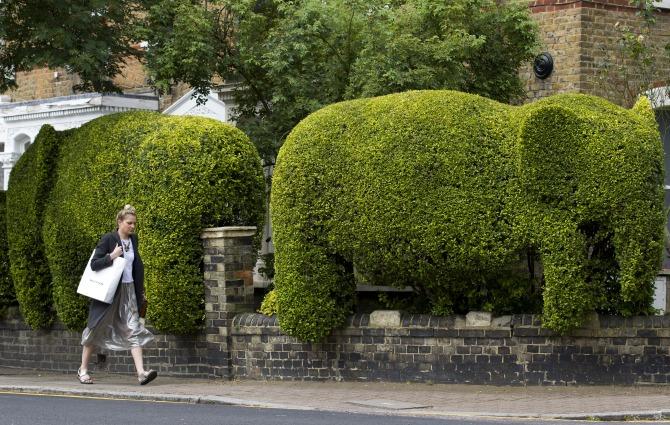 Gli elefanti di Tim Bushe: giardinaggio per beneficenza