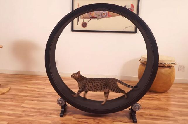 One Fast Cat, la ruota che fa correre i gatti come criceti