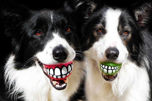 Le migliori invenzioni per cani: 15 idee regalo creative per i vostri amici a quattro zampe