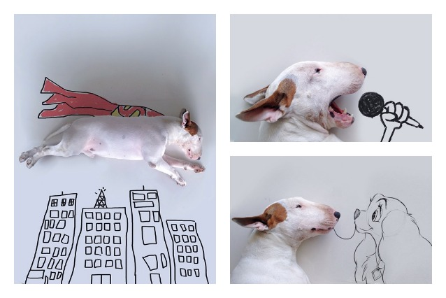 Vita immaginaria di un bull terrier: l'arte di Rafael Mantesso