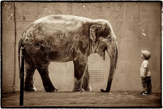 Parigi invasa dagli animali: la street art di Sophie