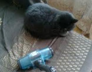 Come eliminare i peli del gatto da coperte e divani: ecco ...