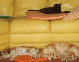 Come eliminare i peli del gatto da coperte e divani ecco alcuni rimedi donna fanpage - Perche i cani scavano sul divano ...