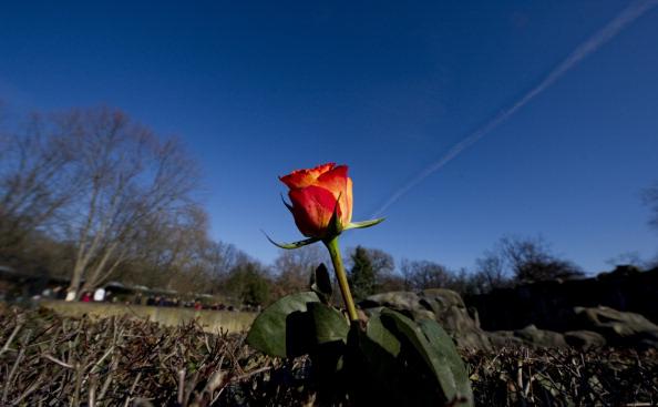 Le Piante Di Rose Richiedono Unu0027esposizione Molto Luminosa E Lu0027ideale è  Garantire Loro Il Sole Diretto Per Almeno 3 4 Ore Al Giorno.