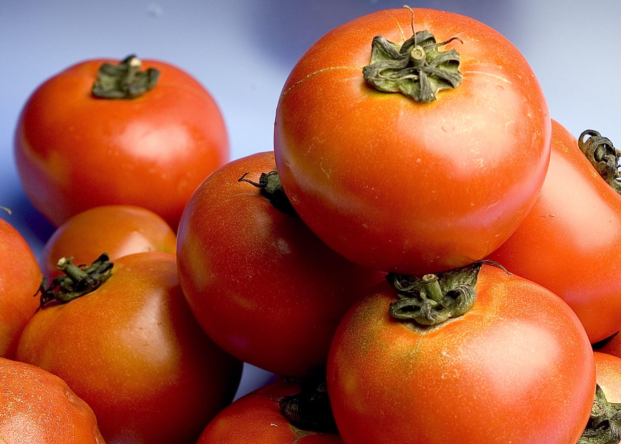 Abbronzatura, arriva la pillola al pomodoro che protegge la pelle