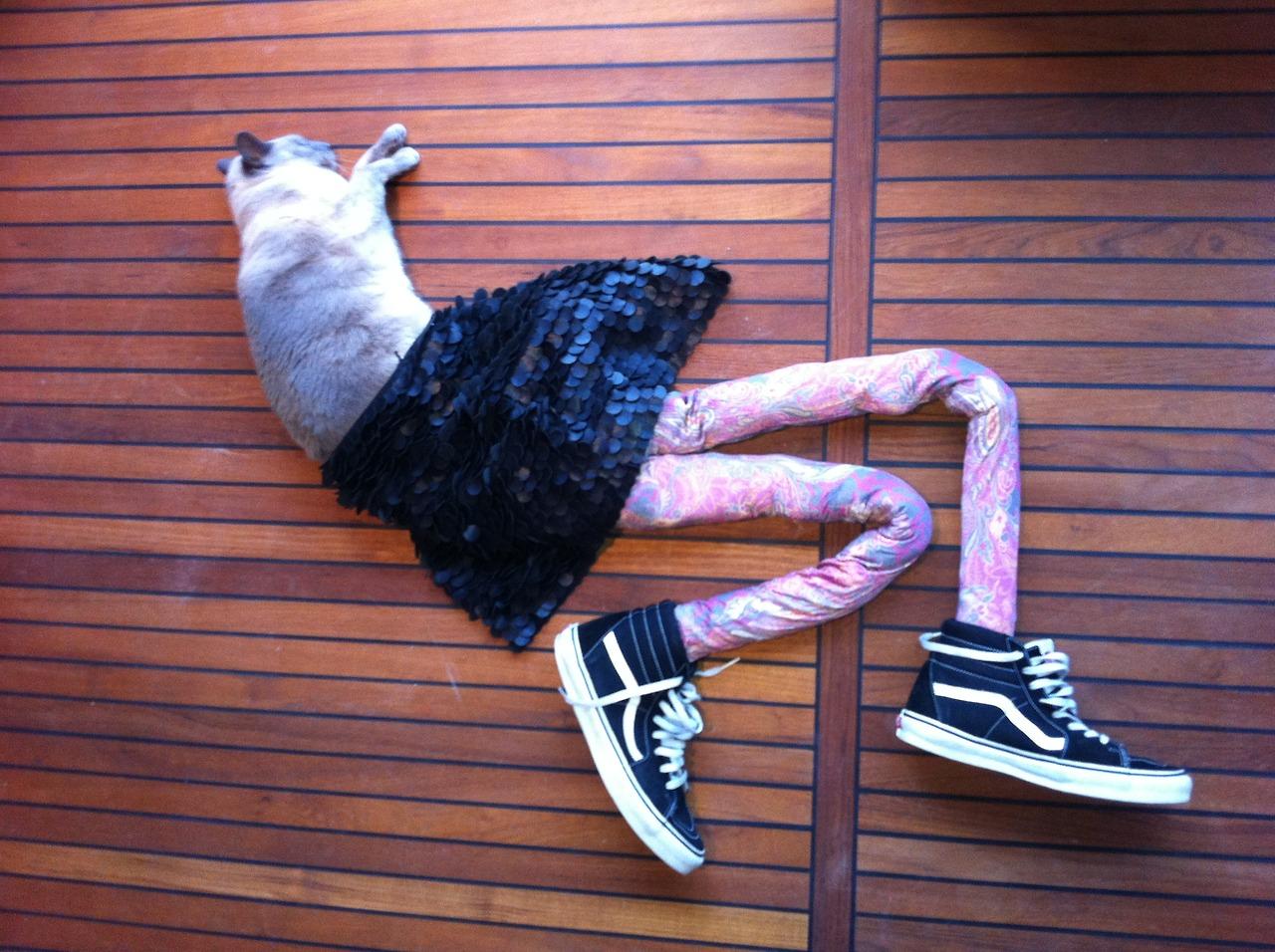 Gatti con i collant, l'ultima mania che spopola sul web (FOTO)