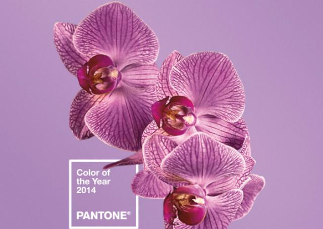 """Pantone svela il """"Colore dell'anno"""" per il 2014: è il Radiant Orchid"""