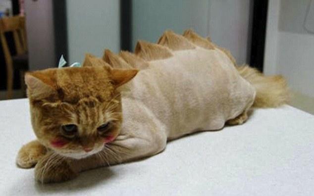 """Trasformare cani e gatti in """"predatori"""". Quando la tendenza diventa crudele (FOTO)"""