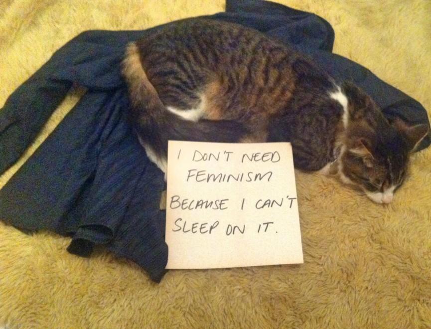 Gatti contro il femminismo, la parodia spopola sul web (FOTO)