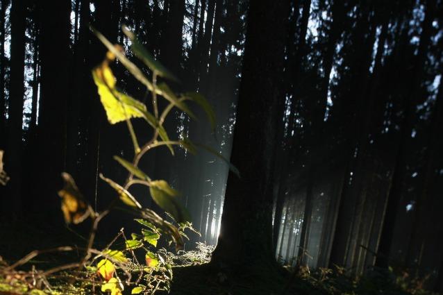 Earth Day 2012, la Terra si festeggia