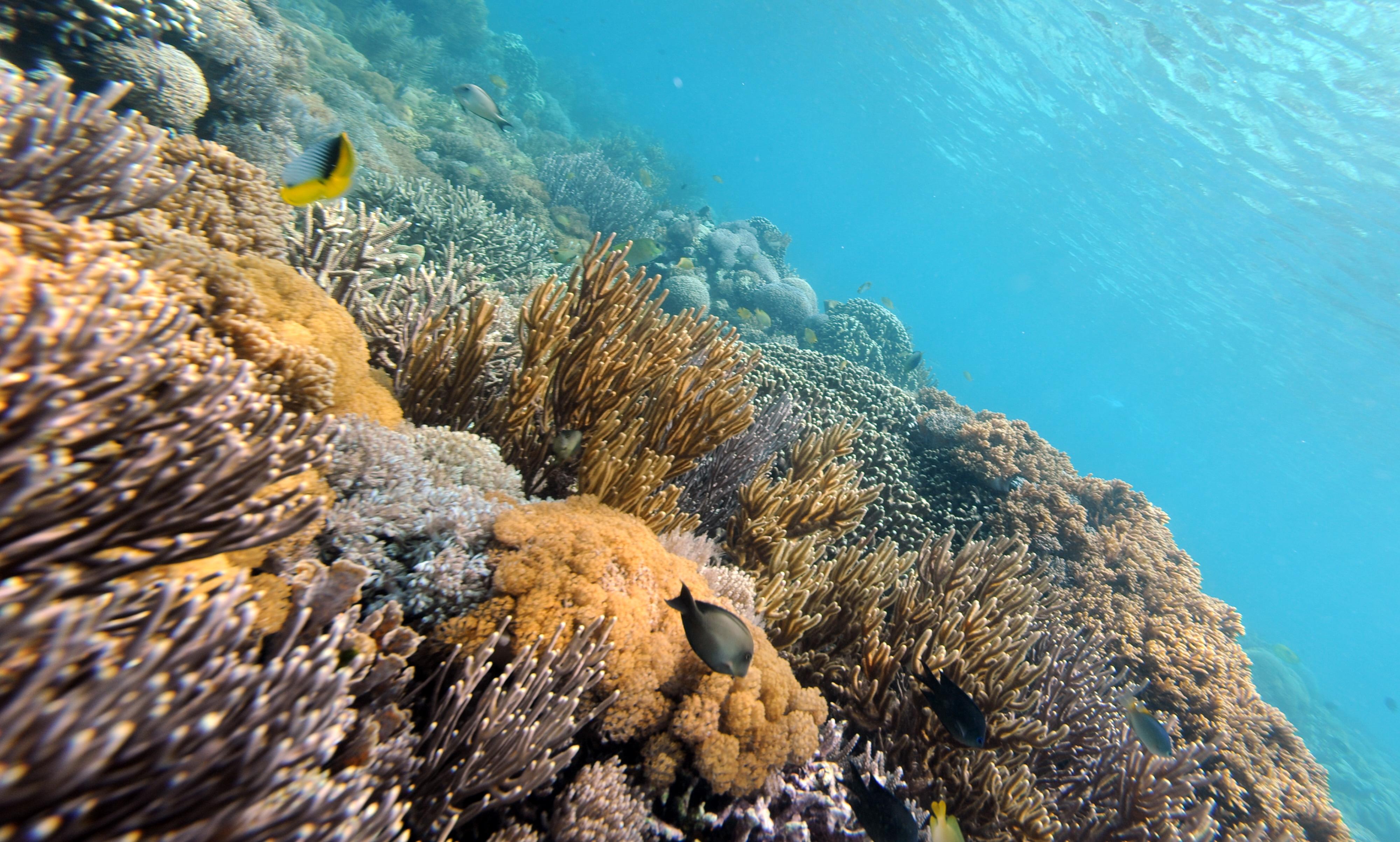 Giornata Internazionale della biodiversità, un Pianeta da proteggere cominciando dal mare