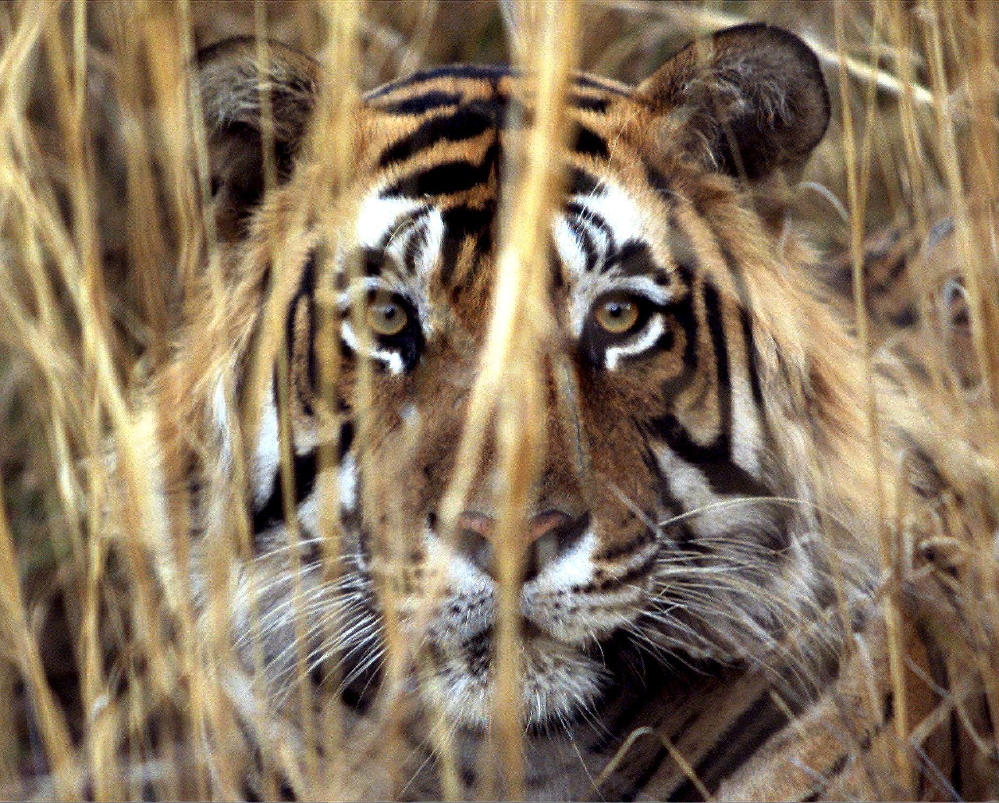 Elefanti, rinoceronti e tigri: i più minacciati dal bracconaggio