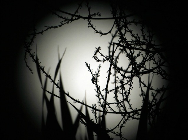 Un agosto con la Luna Blu