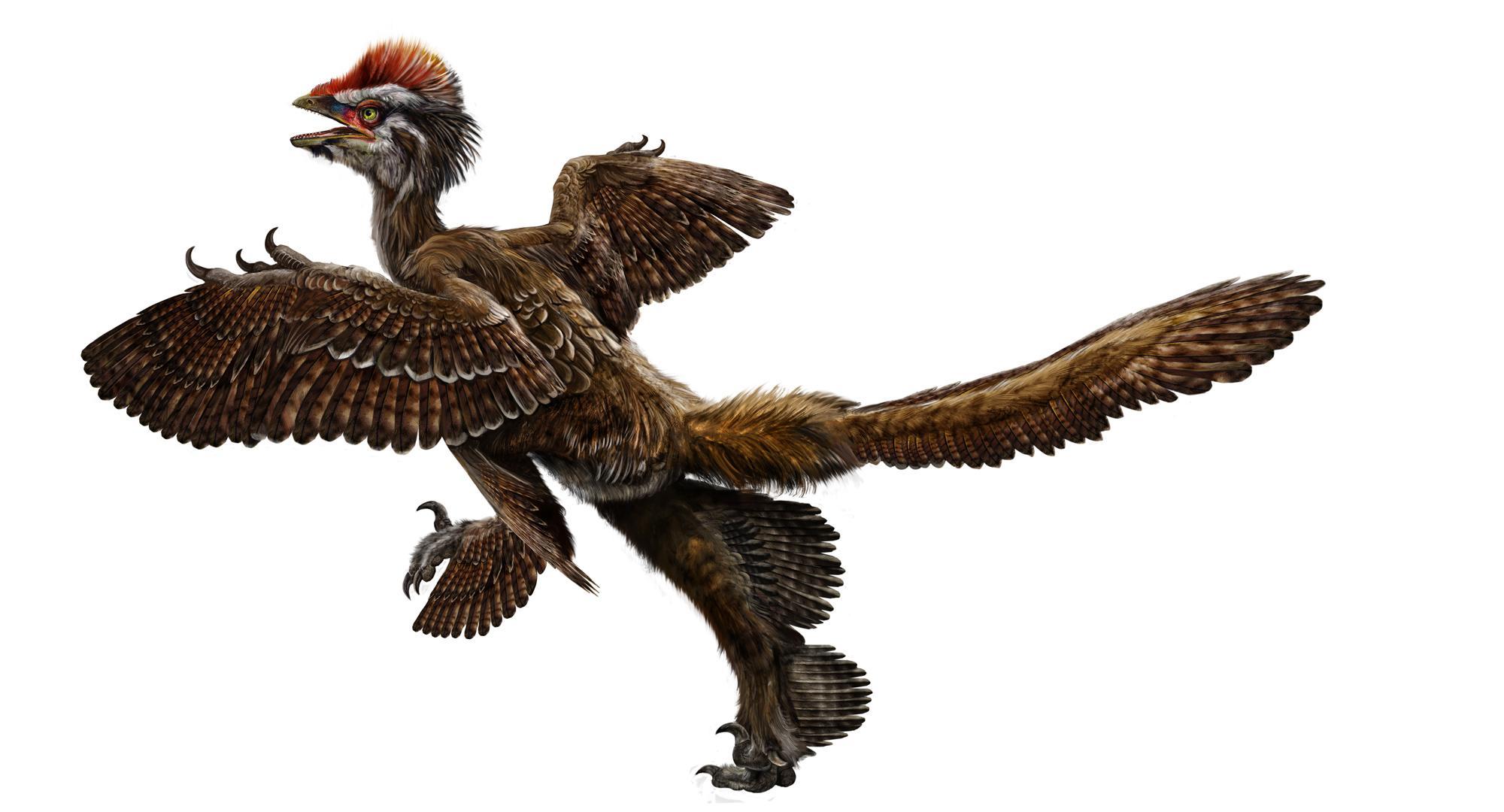 I dinosauri usavano le piume per il corteggiamento