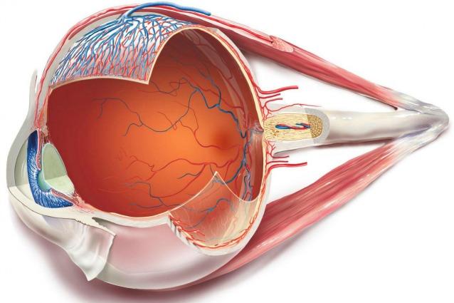 L'occhio bionico che spegne il buio e restituisce la vista