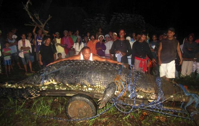 Lolong, il coccodrillo più grande del mondo, è morto nelle Filippine