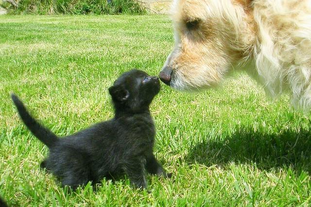 1.647 i cani e gatti uccisi in Virginia dall'associazione animalista PETA