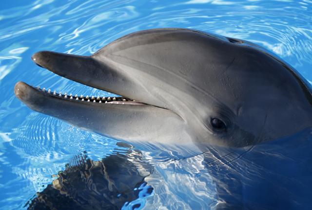 I delfini assassini che scappano per amore (VIDEO)