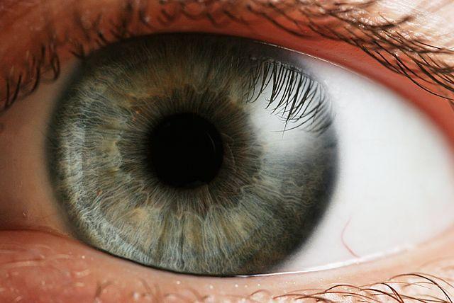 La retina artificiale biocompatibile, un'invenzione italiana di portata internazionale