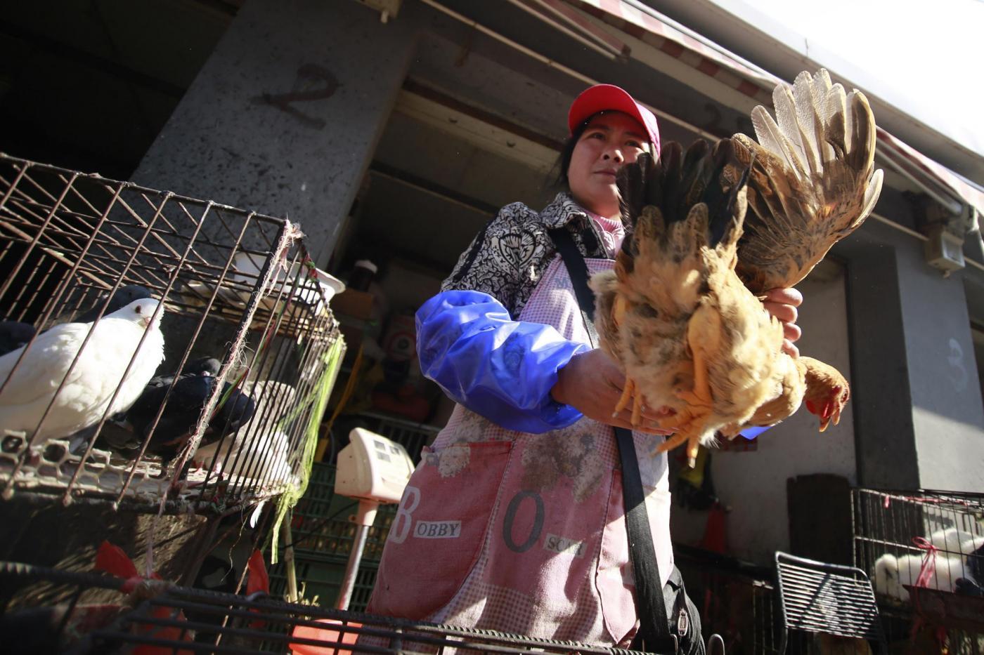 Cina, seconda vittima dell'H7N9, il virus della nuova influenza aviaria