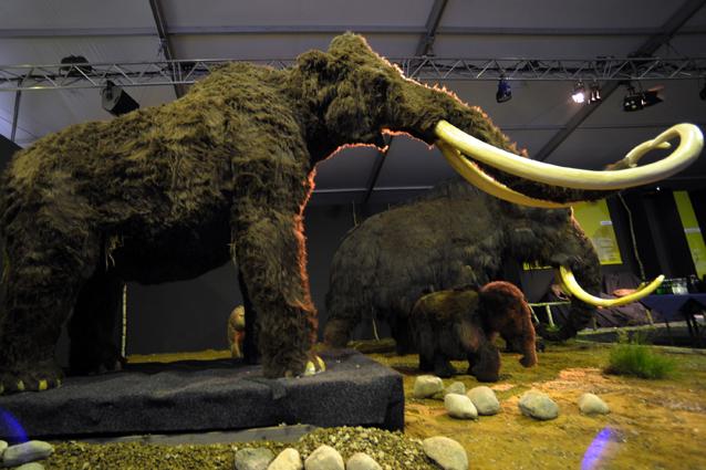"""Trovato sangue di mammut in Siberia: verso """"Jurassic Park""""? (FOTO)"""