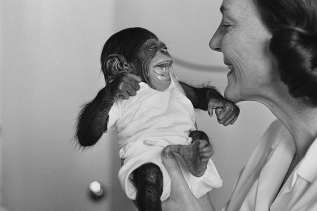 Basta sperimentazioni sugli scimpanzé, gli Usa hanno deciso