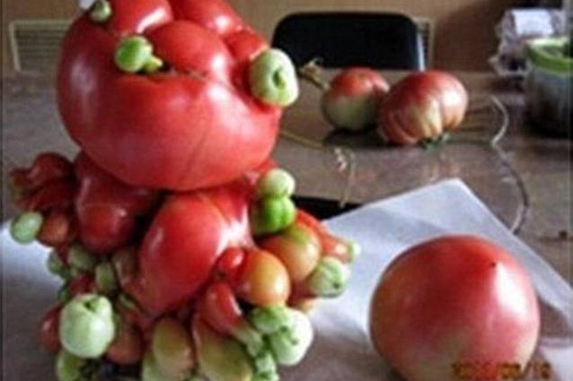 La verdura mutante di Fukushima (FOTO)