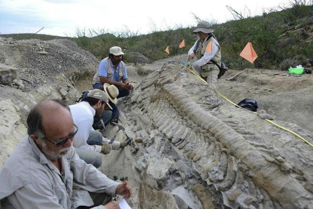 Una coda intatta di dinosauro è stata scoperta in Messico