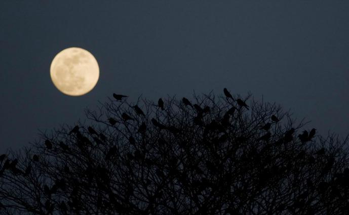 La Luna piena turba il nostro sonno (e non è una leggenda)