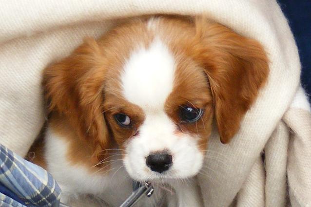 Clona gratis il tuo cane, il singolare concorso in Gran Bretagna
