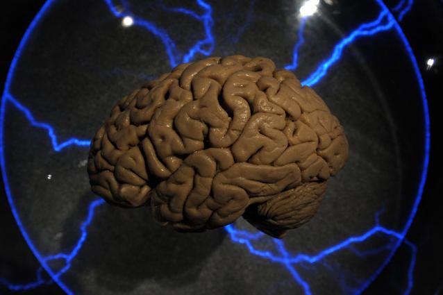 Cervello umano bolle nel teschio: dopo 4000 anni è in buono stato