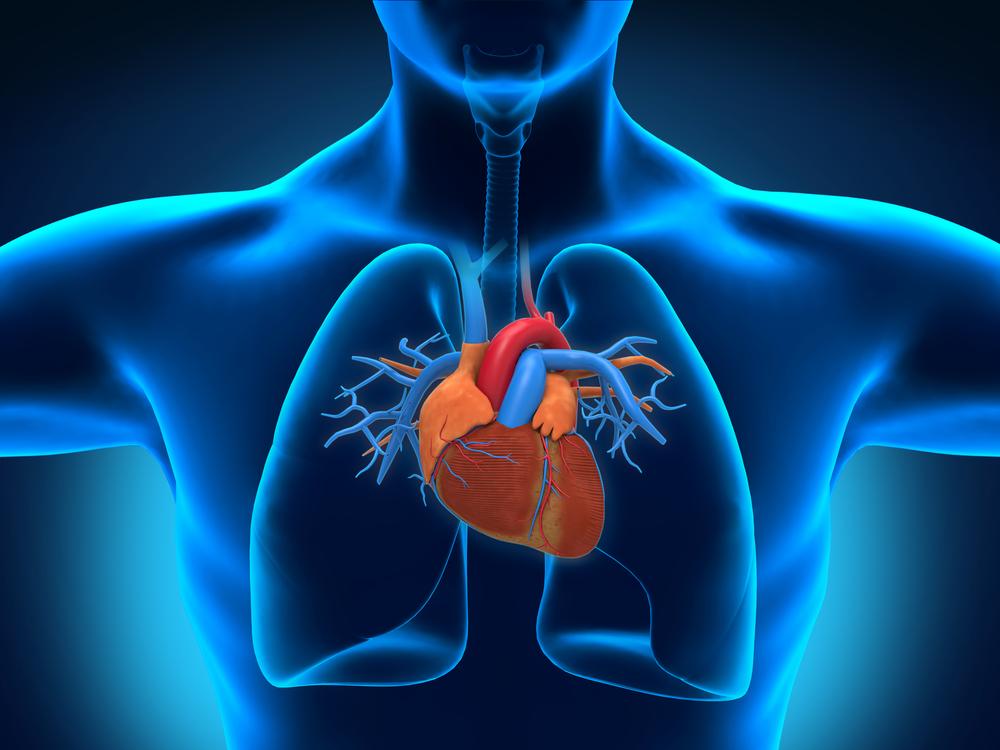 Il cuore in 3D sarà realizzato entro i prossimi 10 anni