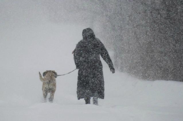 Da lupo a cane: la storia della nascita della più grande amicizia