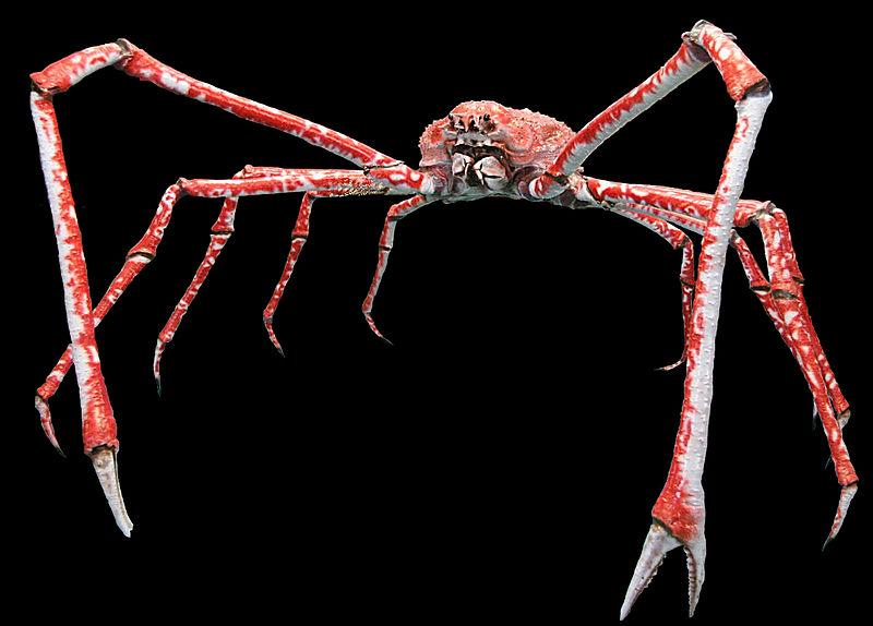 3 metri di artigli, l'animale da film horror che esiste davvero (VIDEO)