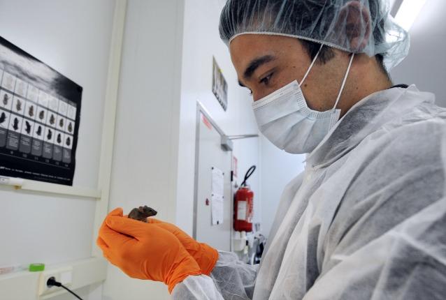 Gli scienziati hanno scoperto l'elisir di giovinezza (forse)