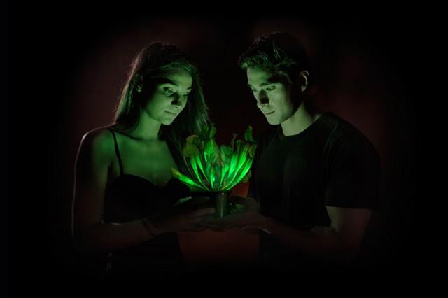 Starlight Avatar, la pianta che fa luce senza elettricità (FOTO)