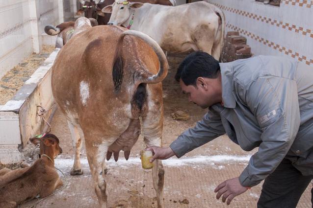 Il villaggio che beve urina per stare meglio