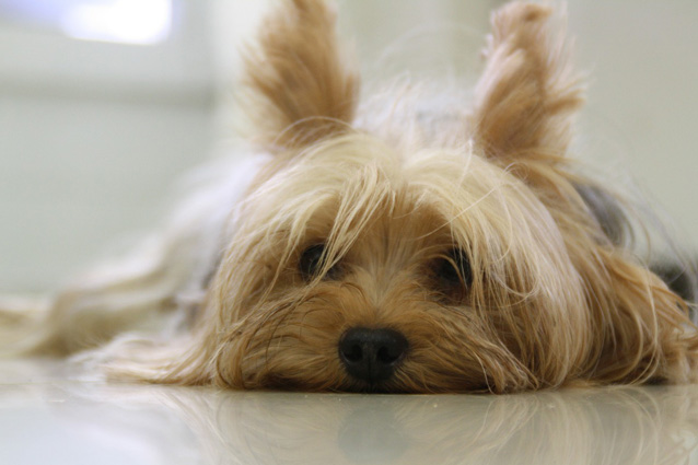 Il tuo cane ti ama davvero (e non solo per interesse)
