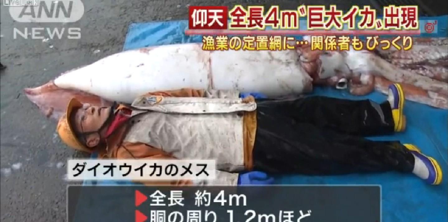 L'invasione dei calamari giganti in Giappone