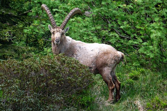 In Italia è a rischio una specie animale su due