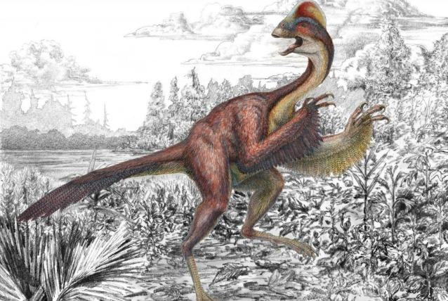 """Il """"pollo-sauro"""" esiste davvero, lo hanno scoperto gli scienziati"""
