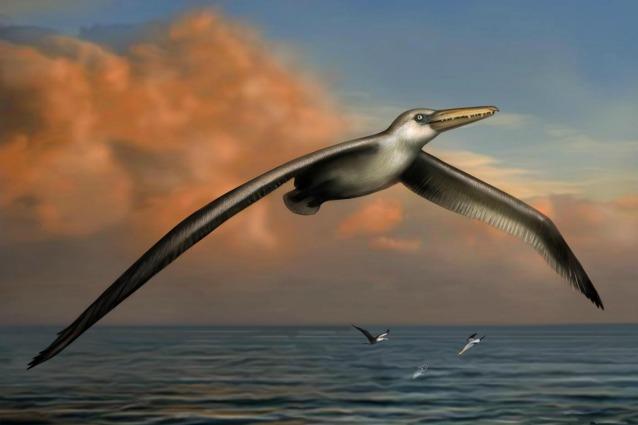 Gli scienziati hanno scoperto l'uccello più grande di tutti i tempi