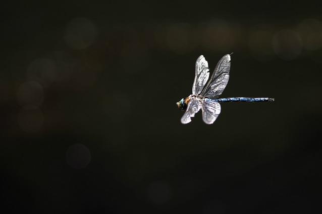 Perché gli insetti sono attratti dalla luce?