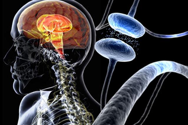 Ricercatori italiani scoprono la causa del Parkinson giovanile