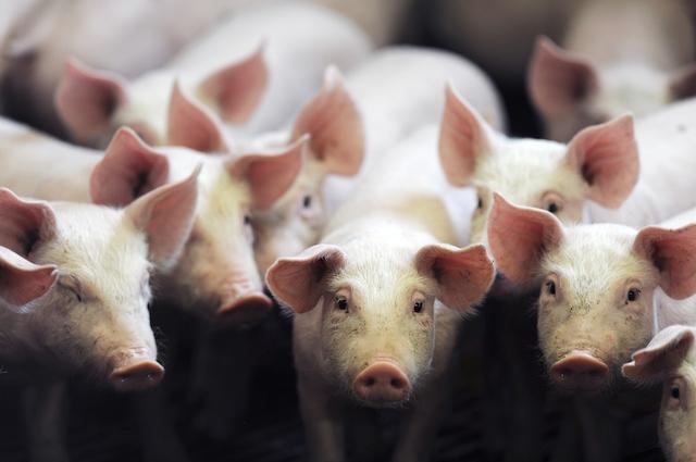 5 animali con cui offendiamo le persone