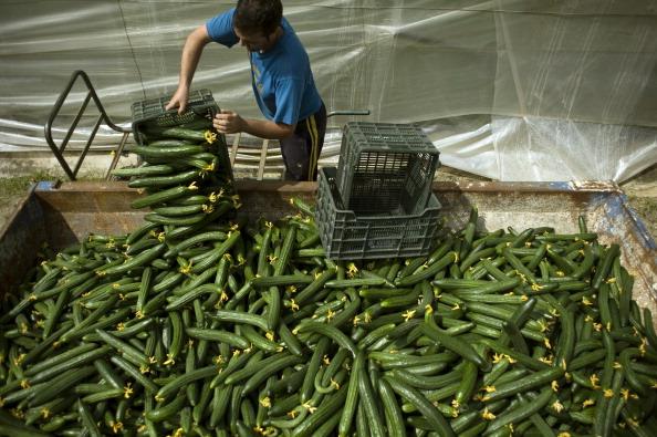 Il giallo del batterio killer: non arriva dai cetrioli. Polemica tra Spagna e Germania