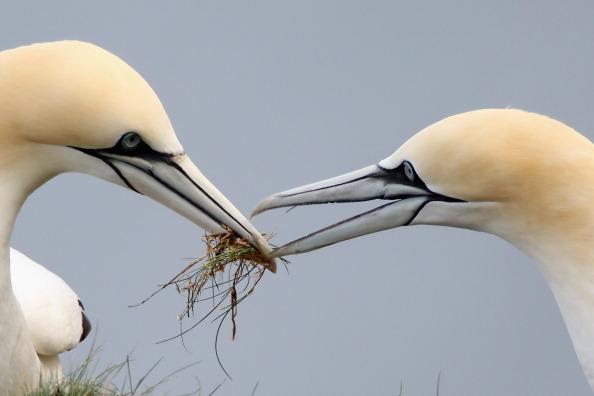 Uccelli: 13 su 100 le specie a rischio estinzione