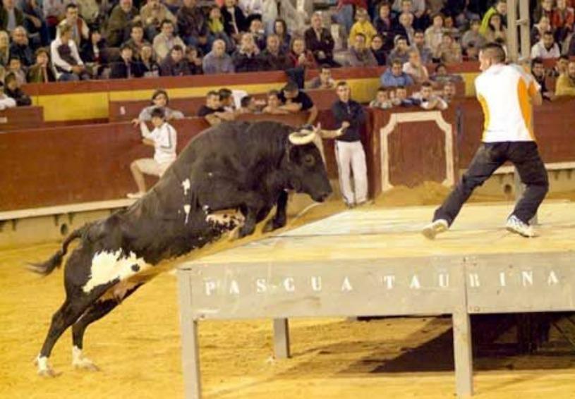 """La Spagna in visibilio per Ratòn: il toro """"assassino"""" è un business da migliaia di euro"""