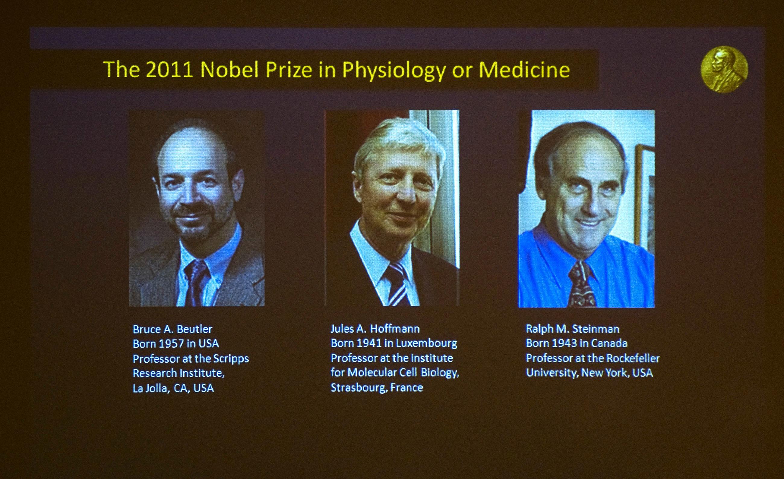 Cellule dendritiche e immunoterapia: il Nobel per la Medicina va a tre scienziati